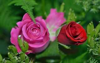 bloom-blossom-flora-63638
